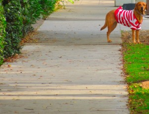 waldo dog-CC