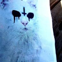 arcane- cat