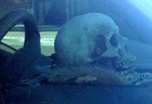 arcane- skull