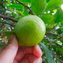 guacamole-lime