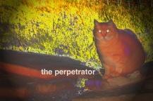 theperpetrator