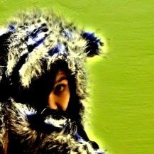 headshot bluejay-color
