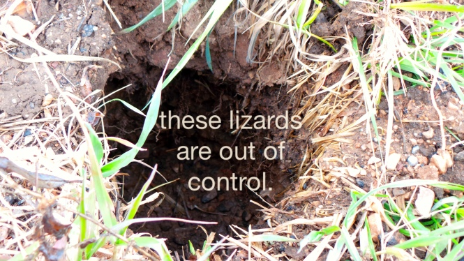 these lizards are out of control