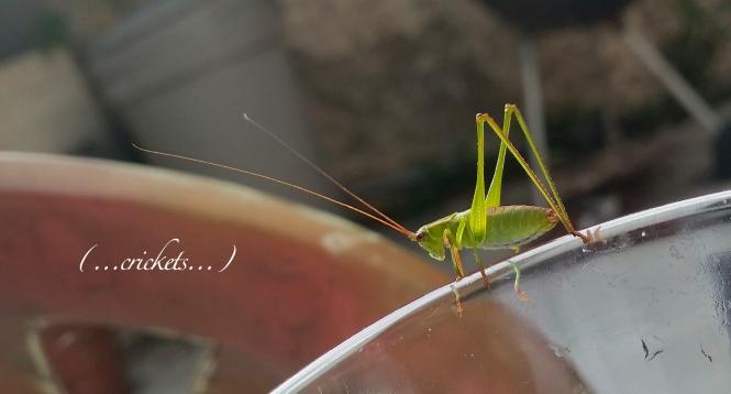 comic-crickets
